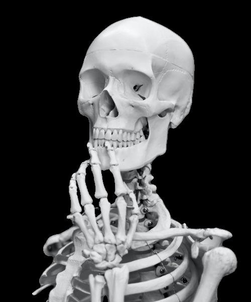halloween-sales-decorations-header-skeleton