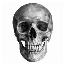 halloween-sales-human-skull-transparent